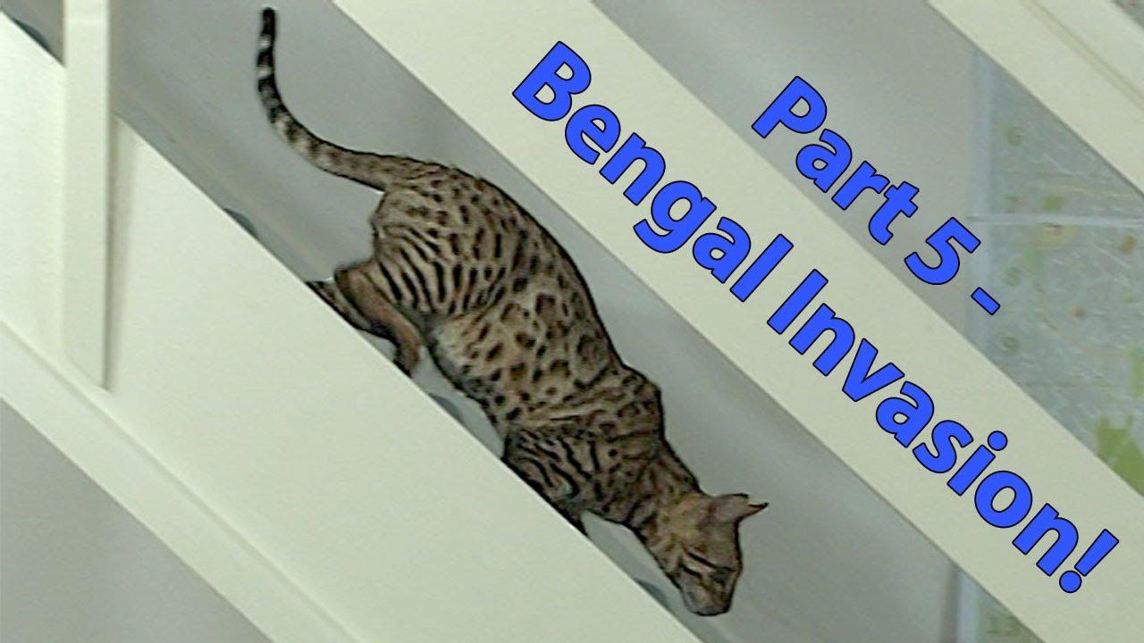 lost indoor outdoor cat