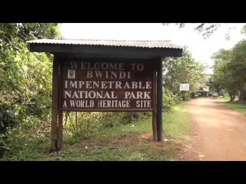 Sanctuary Gorilla Forest Camp | Gorilla Trekking