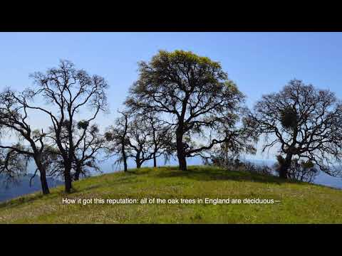 1 Mistletoe (8th of 22 videos in Plants of Twin Peaks)