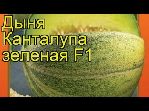 Дыня Канталупа зеленая F1. Краткий обзор, описание характеристик, где купить семена cucumis melo
