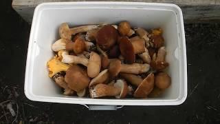 Как без уксуса мариновать белые грибы (рецепт)
