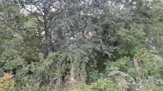 видео Земельные участки на Киевском шоссе