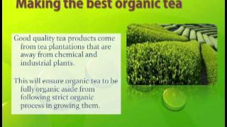Green Tea: Buy Organic Tea from the Best Suppliers