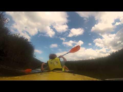 In reeds, Kayaking Neponset River, Milton, MA Sept 1 2014