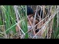 Amazing Fishing at Battambang   Beautiful Girl Fishing   How To Catch Fish By Hand Part23