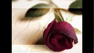 Просто розы и красивая музыка.