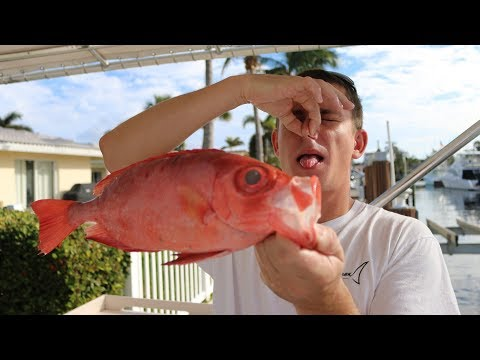 This Fish SMELLS Like TRASH! SHOCKING Taste Test RESULTS! Catch N Cook (Glasseye/Toro Snapper)