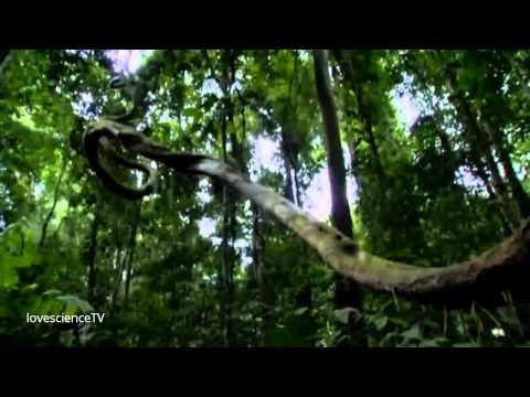 Cuộc Chiến Giành Ánh Sáng Ở Rừng Xích Đạo