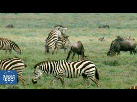 Serengeti National Park - Part 3