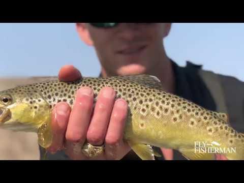 Gunnison River Fly Fishing