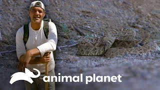 Frank reta a rudos pandilleros a encontrar una serpiente | Wild Frank en California | Animal Planet