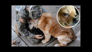 Yıllar sonra sahibini görünce ağlayan köpekler