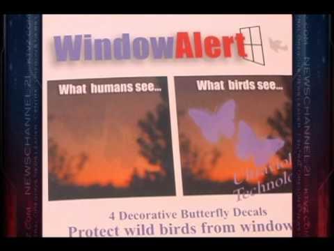 WindowAlert Bird Safety Decals For When Bird Hits Window YouTube - Window decals for bird safety
