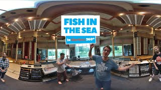 Fish in the Sea | The Longest Johns - 360° at Real World Studios