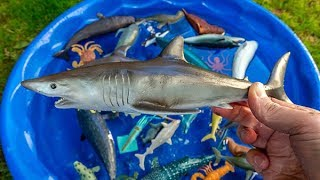 Learn Colors With Wild Sea Animals Blue Water Shark Toys For Kids