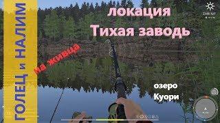 Русская рыбалка 4 озеро Коури Голец и налим на живца