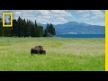 Gambar cover Spend a Relaxing Hour in Yellowstone's Beautiful Landscapes | National Geographic