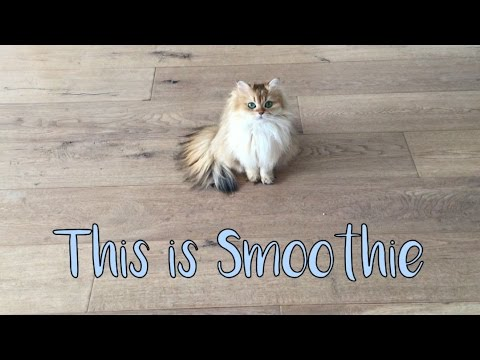 Smoothie The Cat - Introduction