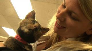 550 Cat Adoption Event