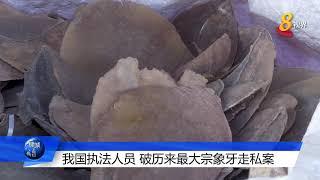 本地历来最大宗象牙走私案 当局起获8.8公吨总值近2000万的象牙