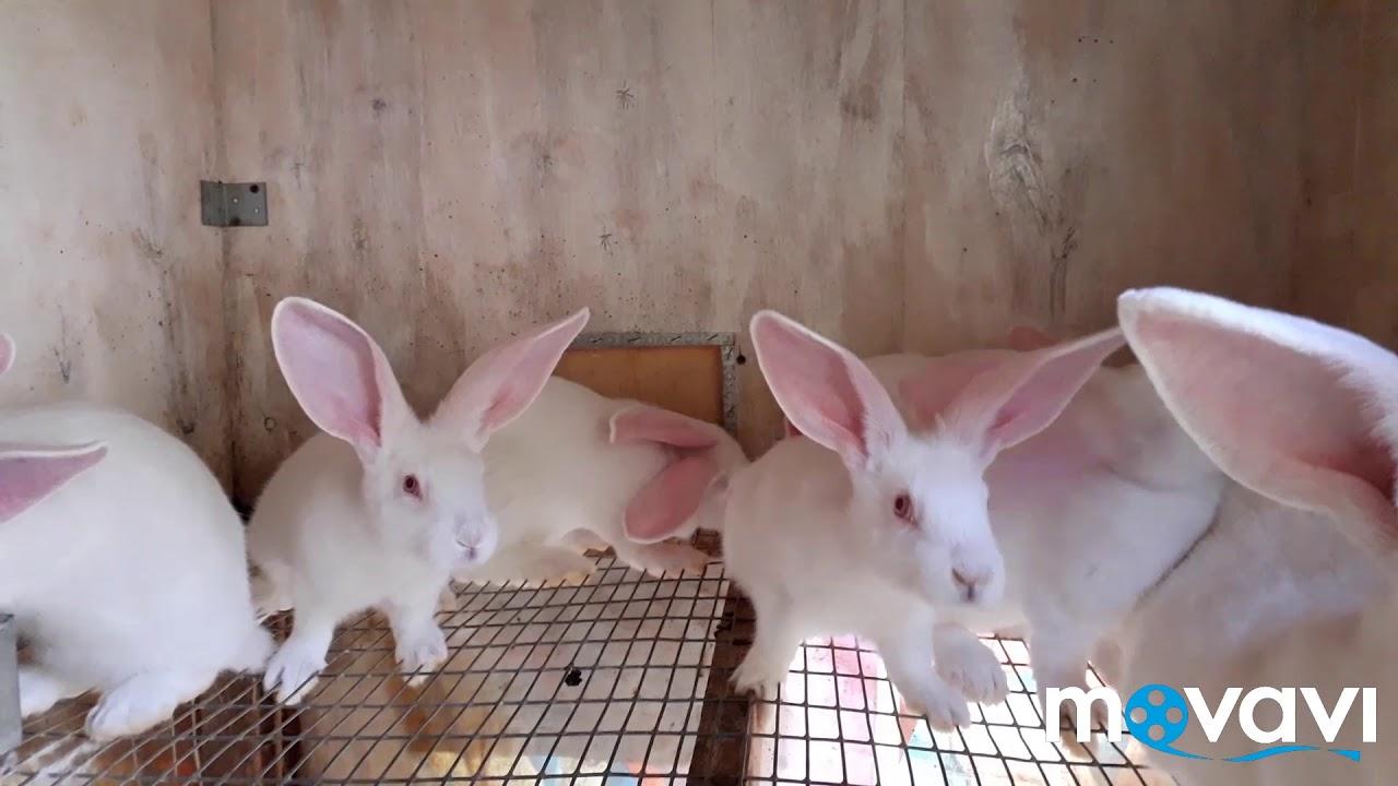 ЛПХ обзор хозяйства. Кролики в домашнем хозяйстве. Разведение бройлерных кур