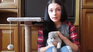 Как приучить котенка к лотку,если ничего не помогает.Мой способ