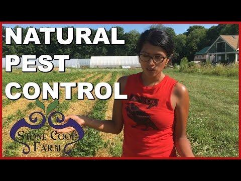 Natural Pest Control and Organic Farming