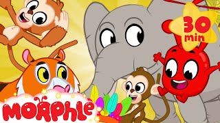 Morphle In The Jungle - Mila And Morphle   Cartoons For Kids   @Morphle TV