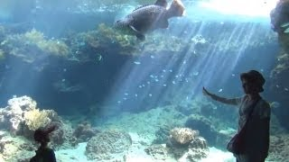 The trip to Okinawa #07 Okinawa Churaumi Aquarium ① 美ら海水族館