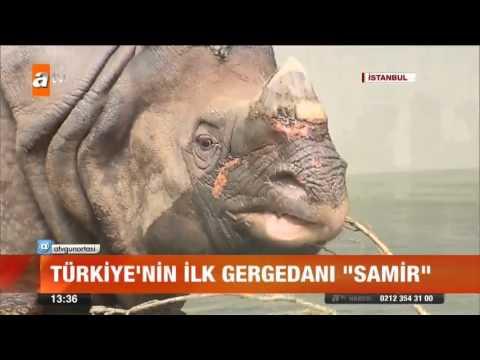 Türkiye'nin Ilk Gergedanı