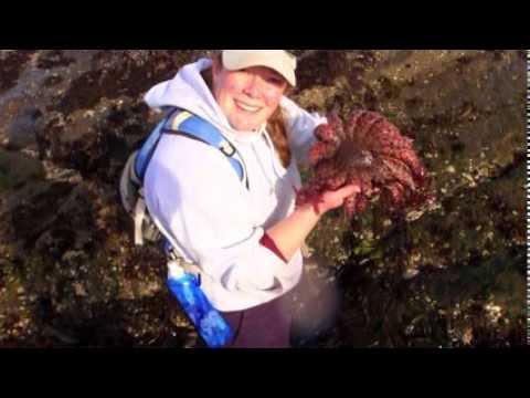 My Marine Science Job