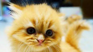 Funny cats. Red headed cat. Подборка. Приколы. Рыжий кот и др. Смешние коты, кошки, котята.