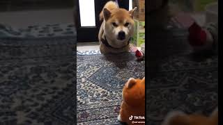 Real Vs Toy Dog Funny Fight Status