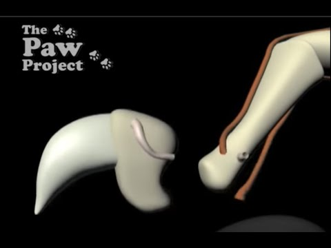 Declaw Surgery