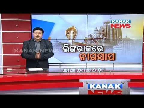 Snake Rescued From Lingaraj Temple
