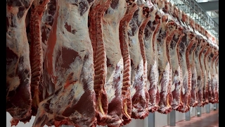 أخبار اقتصادية - اللحوم الفاسدة.. فضيحة تهز #البرازيل والعالم