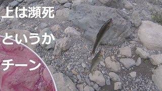 [つりよか] 大鮎荒瀬釣りは正面で構える、基本忘れてまた親子丼ぶり、鏡川