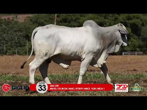 LOTE 33
