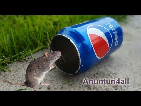 șobolan manual de slăbire)