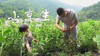 農村爸爸現挖一籃花生,簡單一做,好吃的父女三人直接當飯吃