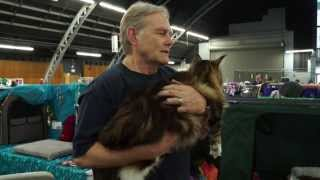 Meet the AristoCATS - Cat Fanciers Santa Rosa Cat Show 2014