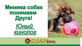 Мимика собак  Юный кинолог  опасна ли собака можно подходить