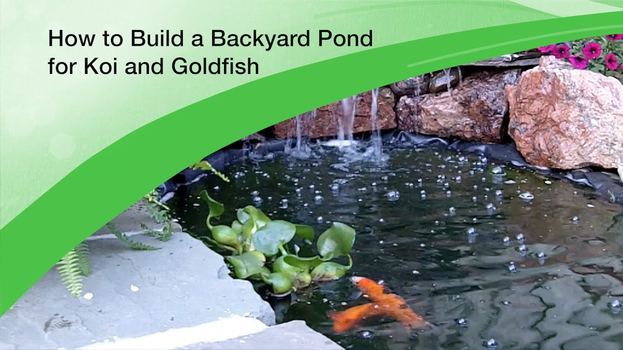 How to build a backyard pond for koi and goldfish design for How to make koi pond water clear