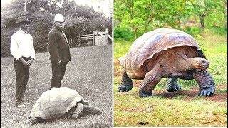 5 Oldest Living Creatures On Earth