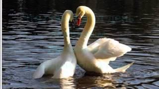 Самое красивое поздравление С днём Св  Валентина