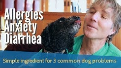 Allergies, Anxiety, Diarrhea: Simple Ingredient for 3 Common Dog Problems