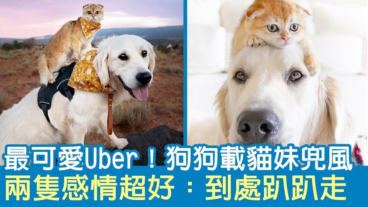 最可愛Uber!狗狗載貓妹兜風,兩隻感情超好:到處趴趴走