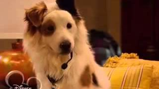 Собака точка ком