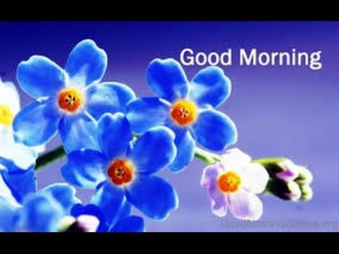 Good Morning With Beautiful Flowers Whatsapp Video Good Morning