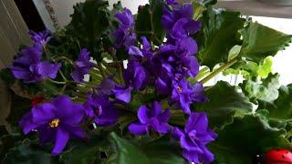 ???? Обзор. Комнатные цветы ????